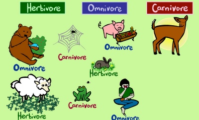 Animals and their diets – Mr Brown's Class